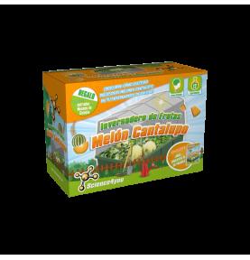 Invernadero de Mini Melones