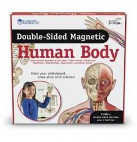 Cuerpo Humano Magnético